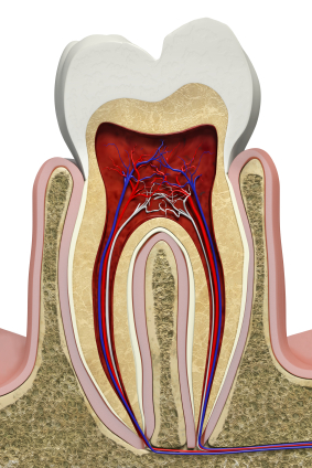 tooth structure, paleo diet, caries, enamel